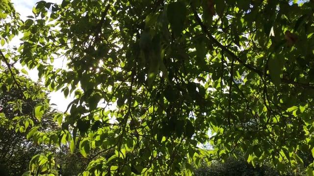 Backyard Therapy